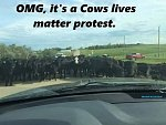 Click image for larger version.  Name:Cows Lives Matter.jpg Views:33 Size:24.5 KB ID:290723