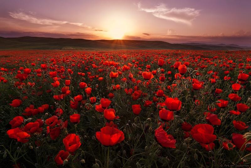 Name:  Sunset - Final Image.jpg Views: 116 Size:  211.4 KB