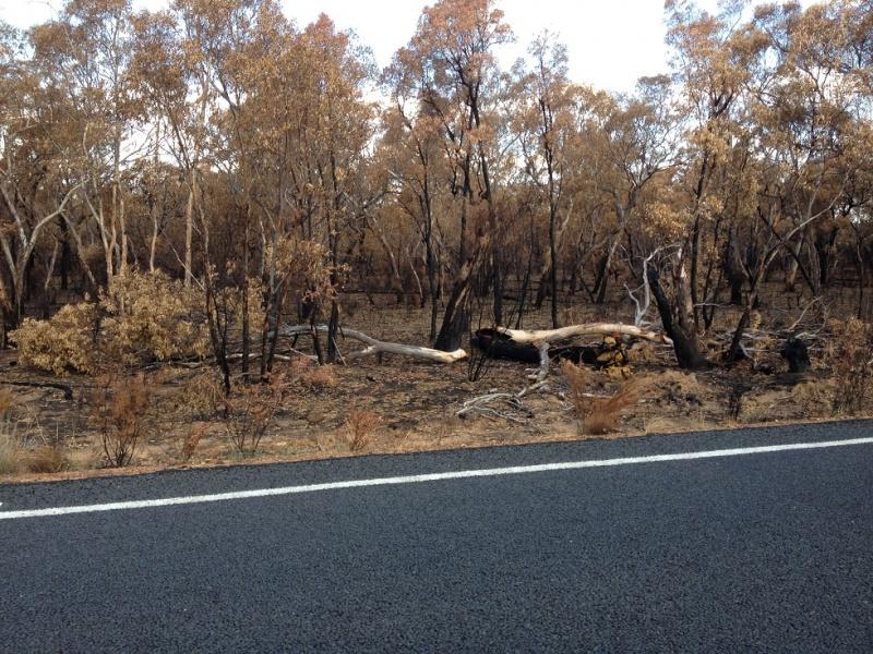 Name:  Piliga Bushfire 3.jpg Views: 68 Size:  290.5 KB