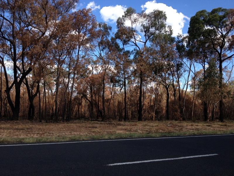 Name:  Piliga Bushfire 1.jpg Views: 69 Size:  272.9 KB