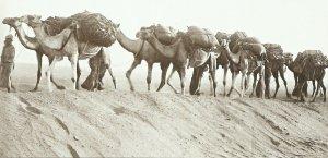 Name:  camel train.jpg Views: 136 Size:  13.1 KB