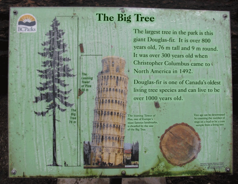 Name:  TheBigTree_PlaqueComp.jpg